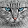 Este recomandat sau nu să tunzi blana pisicii tale?